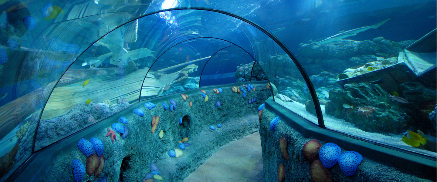 Gardaland Magic Winter e Sealife_N
