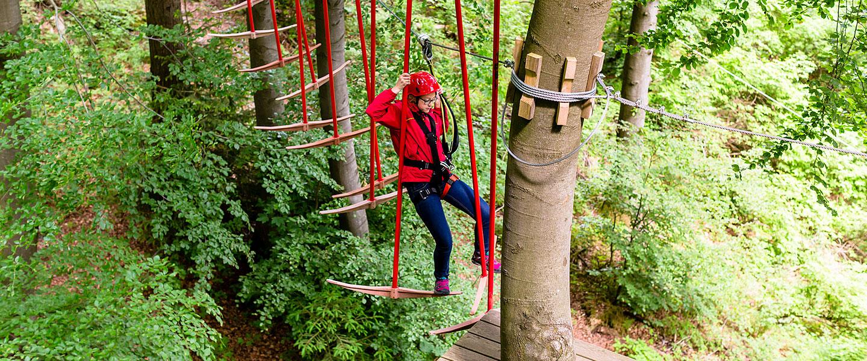 Tree experience Vincigliata Fiesole