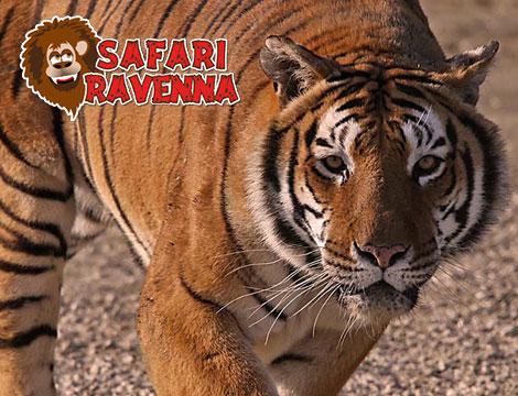Biglietti Safari Park Ravenna