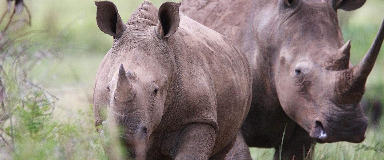 Safari Park_N