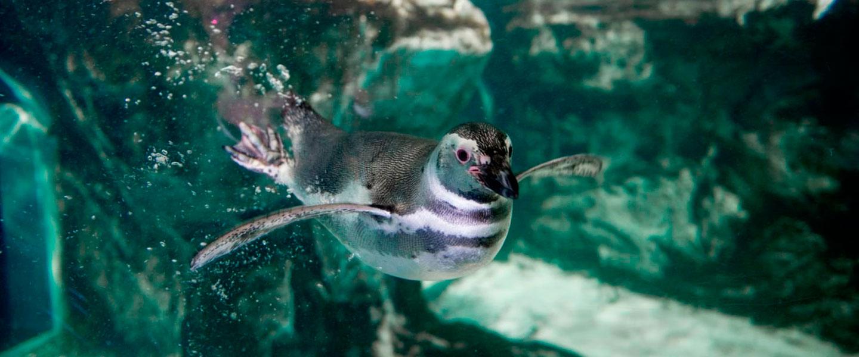 Offerta zoo ingresso all 39 acquario di genova iltuoticket for Acquari nuovi in offerta